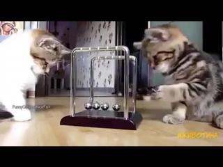 Эти забавные котята