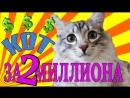 Пермяк продает кота за 2 миллиона