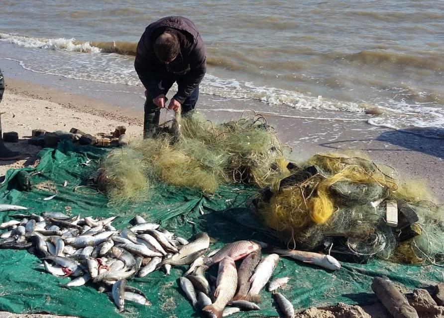 Осудили двух браконьеров за незаконный промысел в Таганрогском заливе. ВИДЕО