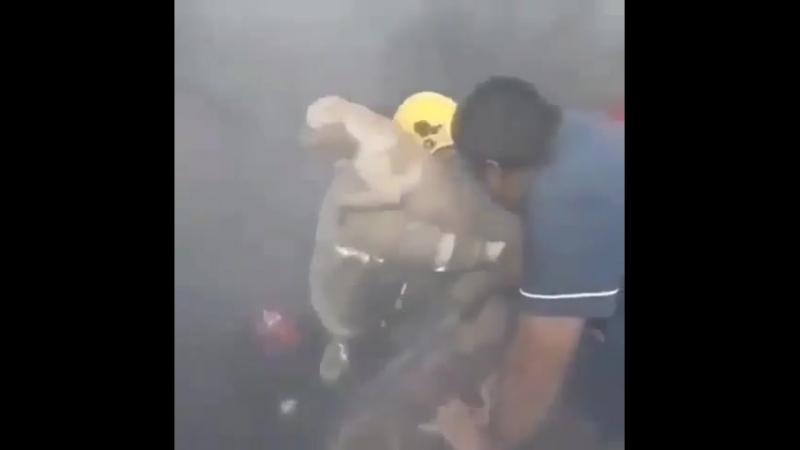 Пожарные часто рискуют собственной жизнью, чтобы спасти людей и животных.