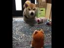 Sana and momo arguing