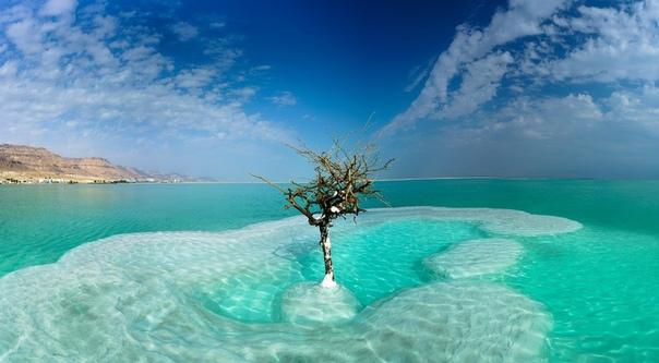 Дерево жизни, посреди Мертвого моря