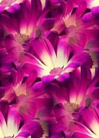 Цветочные и растительные фоны - Страница 2 Oq3uhQORKOQ