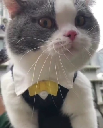 """Cat🐈 kitten🐱 meow on Instagram: """"😂😂😂 Tag someone who should see this! . . . 📹 from tbyaomuri 😄😄 . . . . . cats catpistolss catstagram catsof..."""
