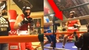 Conor McGregor KOs Opponent in Amateur Boxing Match 2019