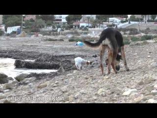 Неофициальный Собачий Пляж в Испании, Альбуферета, Albufereta, Аликанте, Сергей Езовский