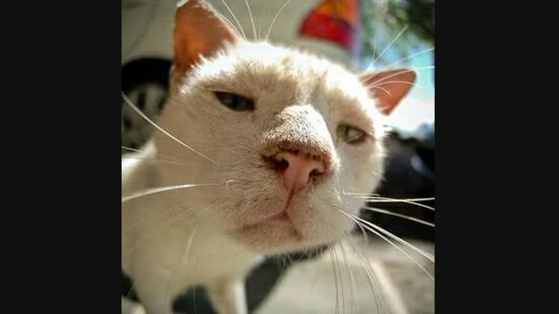 кот ебой -сопли