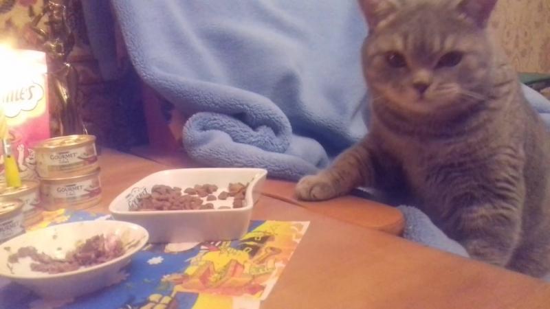 День рождения Барсика нам 2 годика Самый лучший Кот в мире