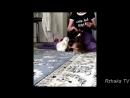 ПОПРОБУЙ НЕ ЗАСМЕЯТЬСЯ - Смешные Приколы с Животными до слез, смешные коты, funn_HD.mp4