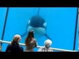 Кит убийца касатка в аквариуме играет с девушкой  Невероятное видео!