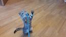 Танцующий котик
