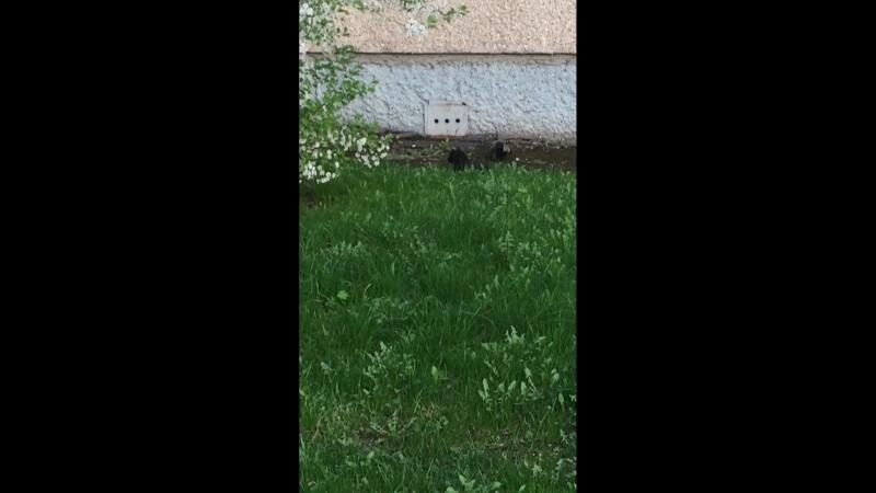 Ворон и кот решили поиграть