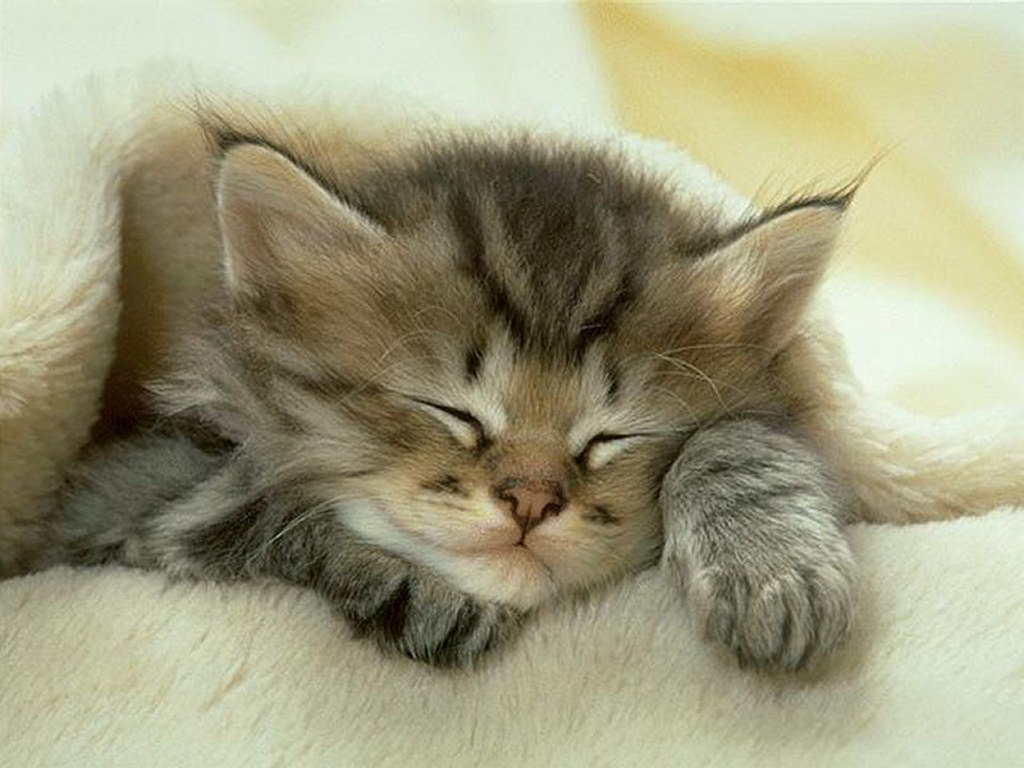 хаски, котэ, спящие котенок, собаки