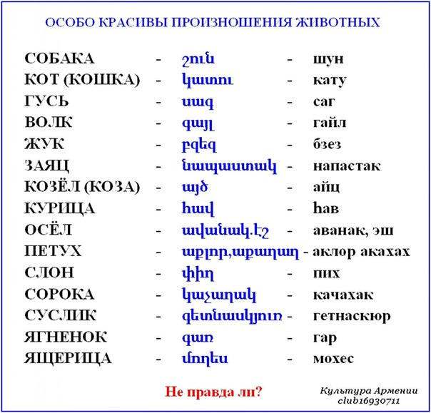 По армянски шат