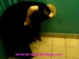 женская драка Школьницы малолетки Уличные драки RU