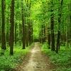 Главное управление лесного хозяйства Омской обл