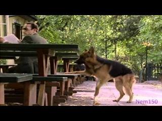 Kommissar Rex-Richard(1x2)