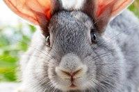 """Предпросмотр схемы вышивки  """"кролик """". кролик, предпросмотр."""
