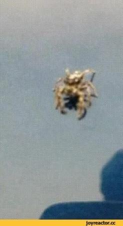 гифки-паук-you-died-удалённое-4759006.gif
