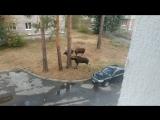 Как я вижу людей которые дерутся за парковку или не так посмотрел...я вижу в них их...