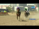 Традиционные конные скачки на Кубок ректора ЯГСХА состоялись в Якутске