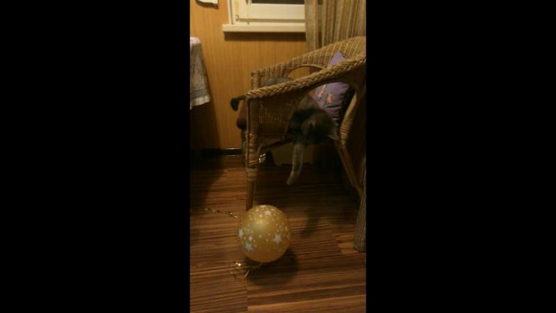 Жирик и шарик