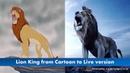 Vua Sư tử hình ảnh chuyển thể hoạt hình 1994 đến điện ảnh thật 2019 Lion King