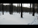 Зима-февраль. Вечерняя прогулка  зимним лесом.