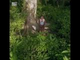Мужчина потратил 37 лет своей жизни, чтобы вырастить огромный лес