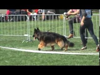 GRISU Frankengold - JACENTUS VIDEO