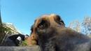 Собака отказывается возвращать GoPro