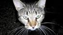 Дворовый кот дегустирует ветчину Нежная