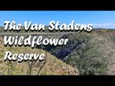 South Africa This is why i love you The Van Stadens Wildflower Reserve in Photos