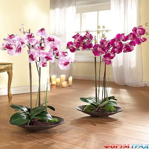 Как заставить Орхидею фаленопсис зацвести?  Существует ряд действенных способов стимулирующих