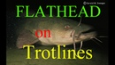 Catching Flathead Catfish with live bait Trotliners
