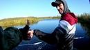 Щука на воблеры осенью река Птичь Беларусь