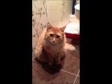 Никита заставляет кота гадить