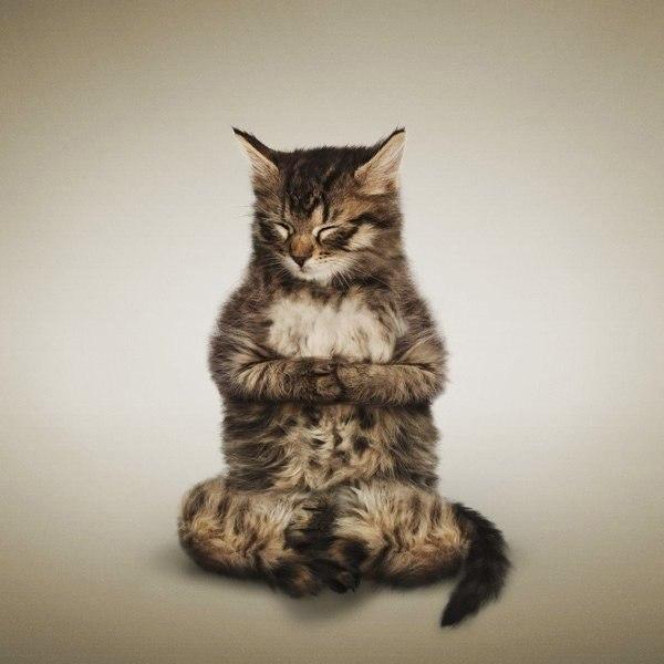 """""""Кошачья йога"""" от фотографа Daniel Borris"""