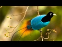 StereOMantra - Birds of Paradise
