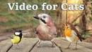 Videos for Cats to Watch - 8 Hour Bird Bonanza