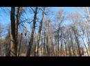 Апрель в Александровском саду 14 04 2019 Видео Г Т И