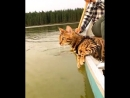 Кот любит кататься на лодке)