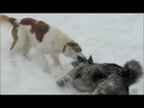 Clash of the Puppies The Ice Age