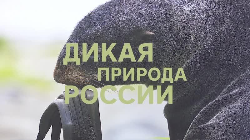 Выставка фотографий Дикая природа России
