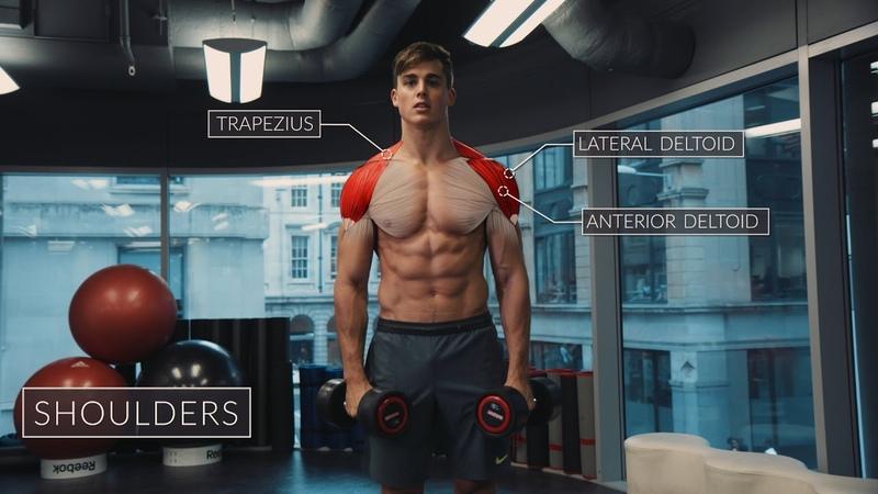 Exercise Anatomy Shoulders Workout   Pietro Boselli