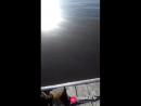 Анта Крис рада ныряют с 3 метровой высоты
