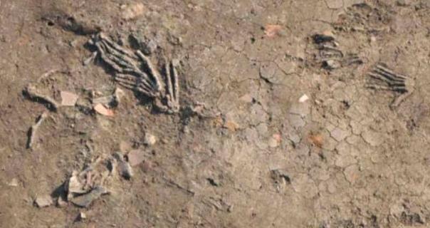 Несколько последних открытий, из Древнего Египта.