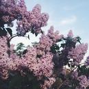 Ах, весна, какое романтическое время! .Все счастливы, улыбаются и счастливы…Цветы в руках подруг…