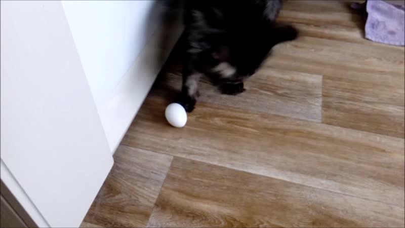 Винсент задел лапкой, яичко и разбилось