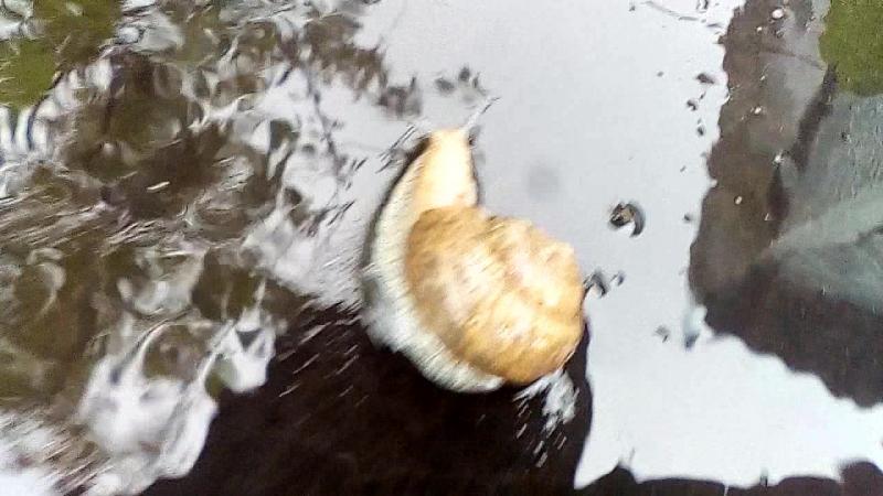 воду отключили,а дождь пошел - не упусти момент